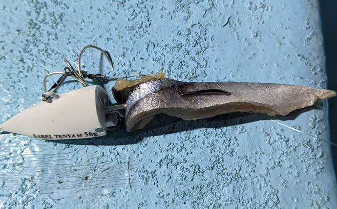 ご当地釣法『サーベルテンヤ』でタチウオ釣り 好ゲストには深海魚も?
