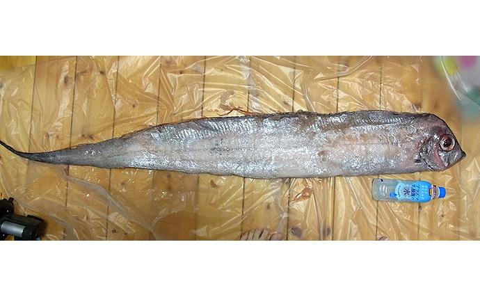 「リュウグウノツカイ」を生きた姿で発見 深海魚が浅瀬に来る理由とは?