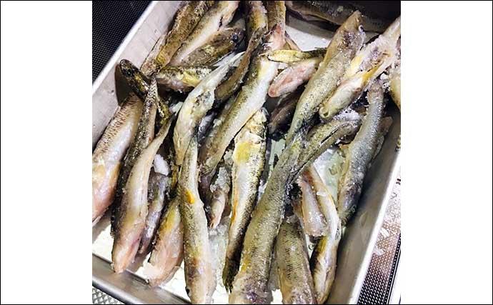 釣魚で作るおせち料理レシピ:ハゼの甘露煮 お茶で煮込んでふっくらと
