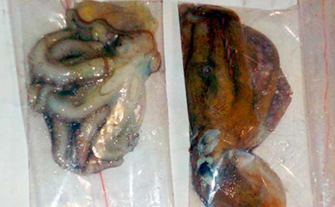 釣魚で作るおせち料理レシピ:マダコと里芋の煮物&酢ダコ