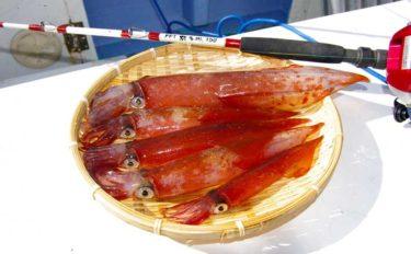 釣具店が勧める沖釣りターゲット:ヤリイカ【フジモリフィッシング】