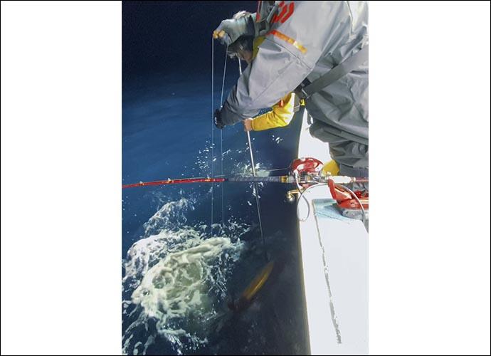 Dr.近藤惣一郎のフィッシングクリニック:怪物「タルイカ」のエサ釣り