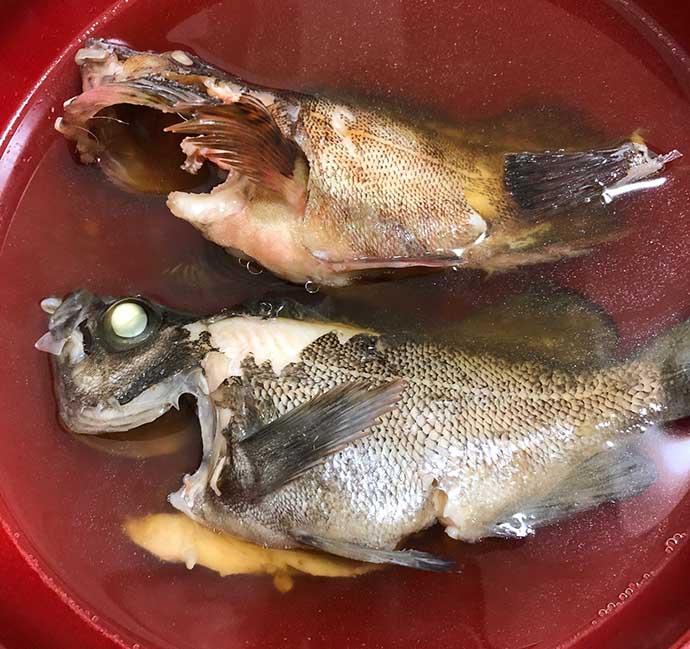 釣り人的『カサゴ』のすべらない料理5選 煮・焼・生で死角なし?