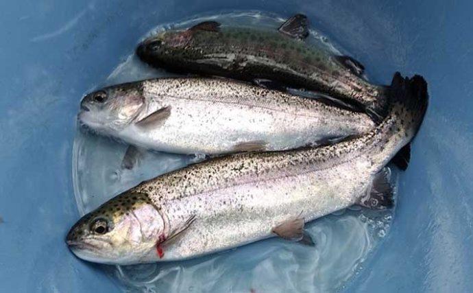 家族3人で1日6,000円 釣り&アスレチックを満喫【千葉・清水公園】