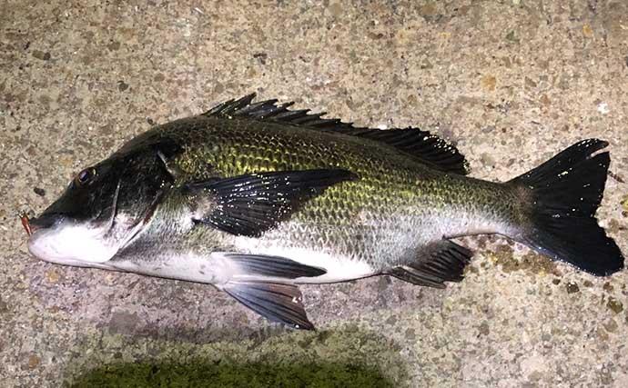 今さら聞けないカサゴゲームのキホン:スレた大型魚を攻略する方法は?