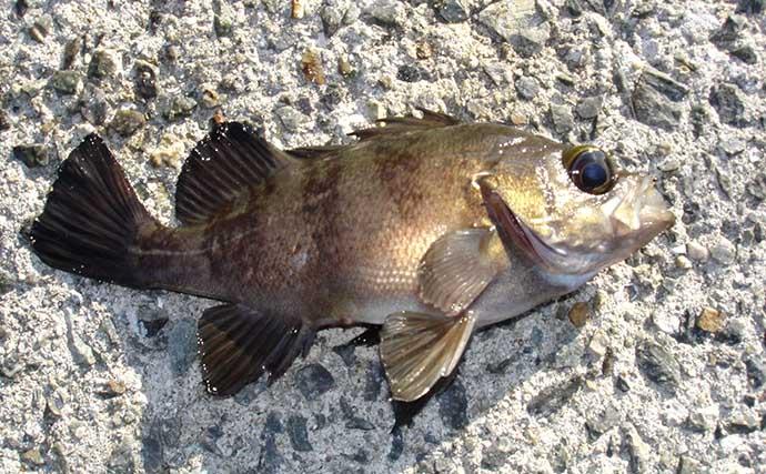 【2020-2021】年末年始は家族で釣り行こう 関西オススメ釣り施設5選