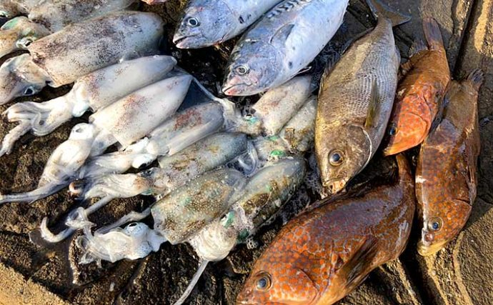 憧れの『壱岐島』へ「0泊2日」遠征釣行 際立つ魚影の濃さに興奮【長崎】