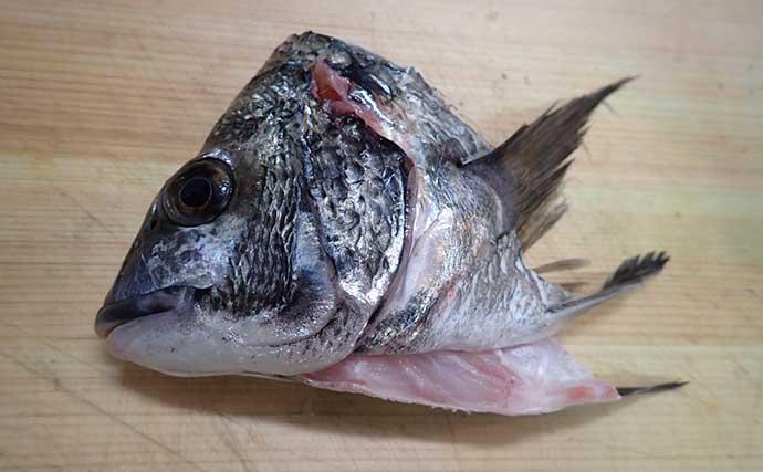 【釣果レシピ】クロダイの『アラ炊き』 冬期の脂ノリはマダイ並み?