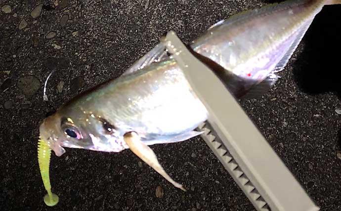 『メバリング』ステップアップ解説:大きいワームでは大型が釣れる?