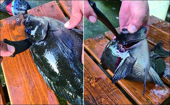 【釣果レシピ】冬の魚鍋:グレの「しゃぶしゃぶ」 冷えた体もポカポカ