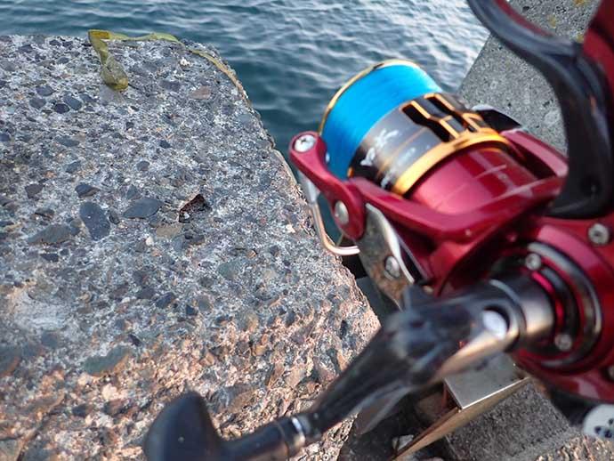 フカセ釣りで『年無し』クロダイ浮上 まさかの1投目でヒット【清水港】