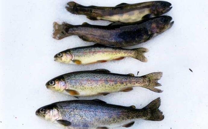 【2021渓流解禁直前】おすすめアマゴ釣り場紹介:土山漁協管内