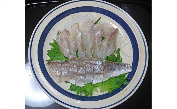 かまぼこ材料の「シログチ」は冬が旬 刺身は『レベチ』な美味しさ?