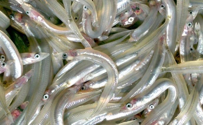 瀬戸内海の「イカナゴ」が今春も大不漁予測 なぜ資源量は回復しない?