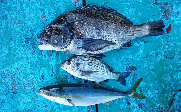 【三重】カカリ釣り最新釣果 「年無し」筆頭に大型クロダイ射程内