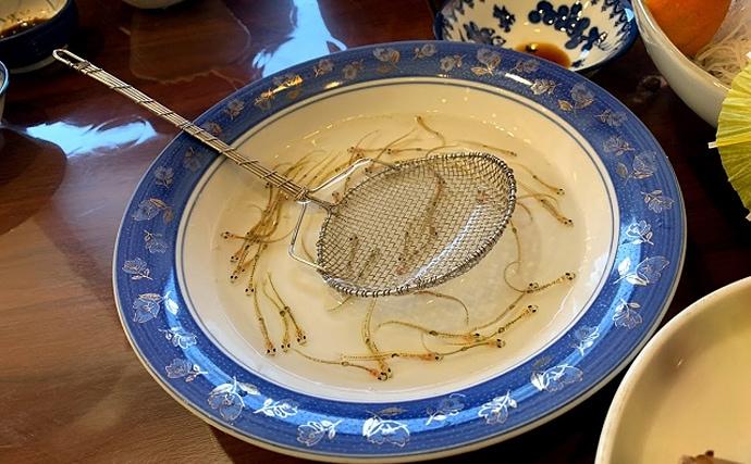 河口の春告魚「シロウオ」漁が解禁 「シラウオ」とは実は全くの別種