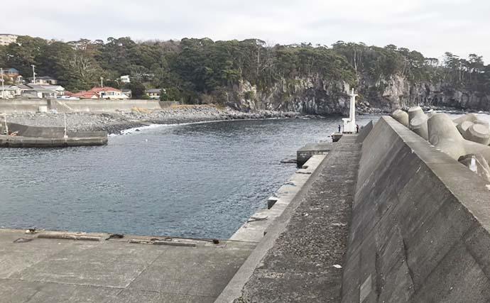 ナイトエギングでヤリイカ接岸確認 アオリ&ケンサキも【八幡野港】
