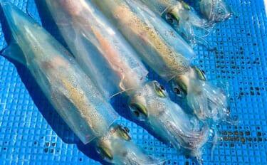 相模湾「ヤリイカ」釣り本格シーズン到来 釣る人3連掛けも【儀兵衛丸】