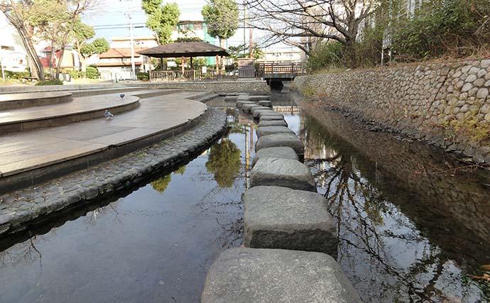 都市河川でナマズ&ティラピア好捕 温排水が狙い目【愛知・荒子川】
