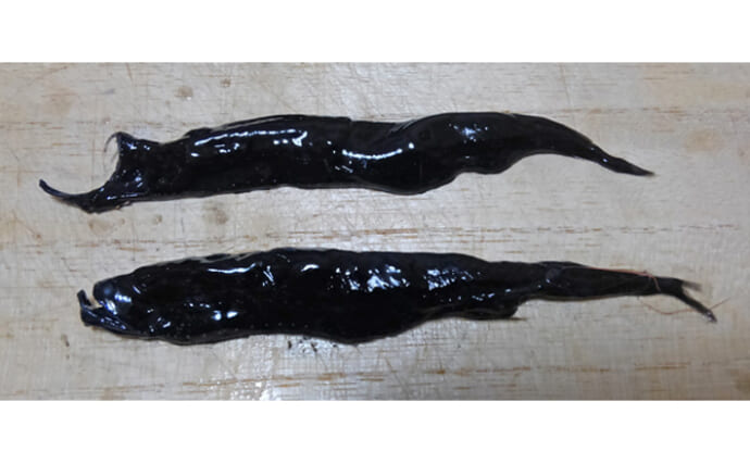 ユニークな『深海魚』の世界 近年発見された「不思議すぎる」新種たち