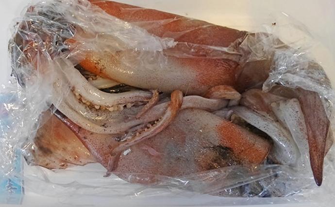 生きた『ダイオウイカ』が漂着 気になる味は「美味しくない」可能性大?