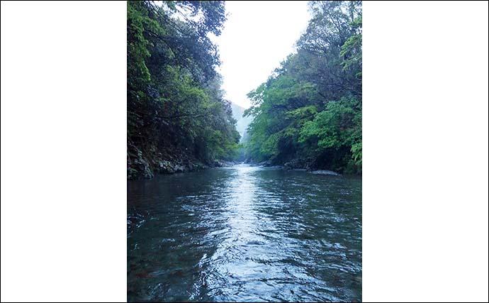 【2021渓流解禁直前】おすすめアマゴ釣り場紹介:長良川郡上漁協管内
