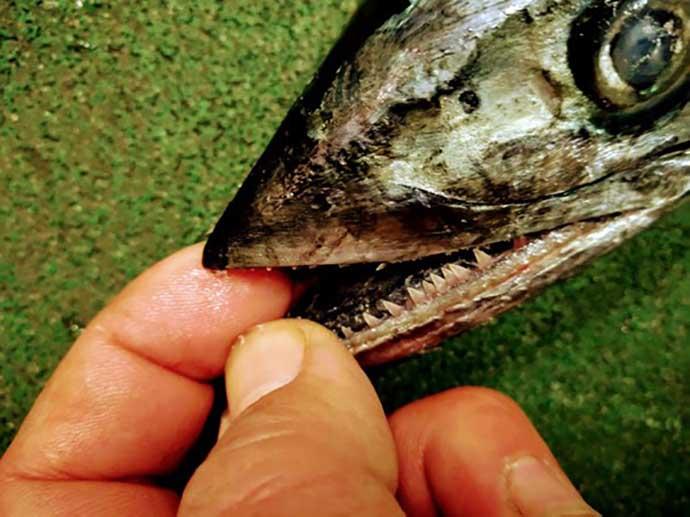 プロが教える「旬魚」の見分け方:サワラ ヌメリ有無と水揚げ港に注目