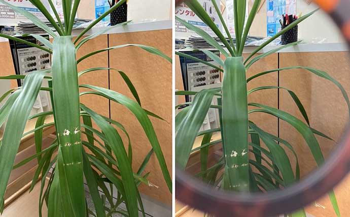 『偏光サングラス』レンズの選び方3選 可視光線透過率と偏光度とは?