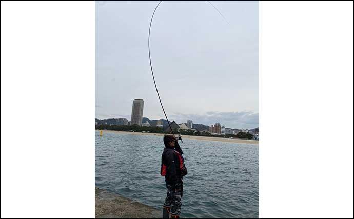 沖堤フカセ釣りで40cmチヌ さしエサのローテが的中【須磨一文字】