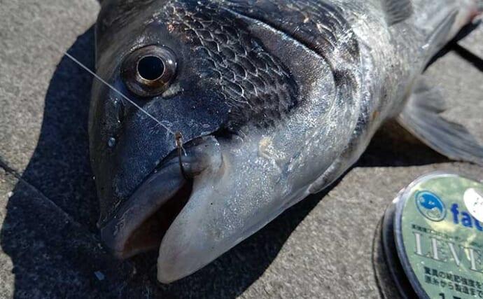 フカセクロダイ釣りステップアップ解説:チヌバリの『号数』選択術3選