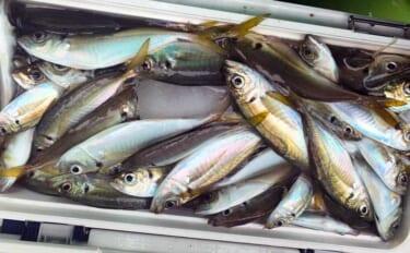 今さら聞けない東京湾LTアジのキホン:魚「活性」別コマセの振り方