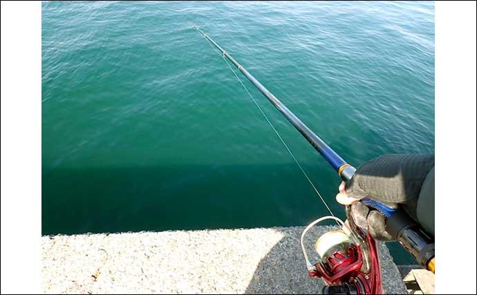 フカセクロダイ釣りで本命8尾 乗っ込み先鋒隊の回遊か?【清水港】