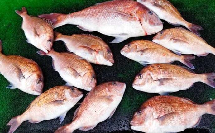 【三重・愛知】海上釣り堀最新釣果 大型含みでマダイ好調継続
