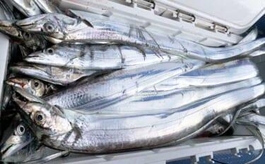 【茨城2021】鹿島沖タチウオ釣り入門 冬の「幽霊魚」は期間限定?
