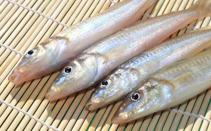 冬の2days『投げキス』釣行 23cm頭に1kg超釣果【千葉・館山】