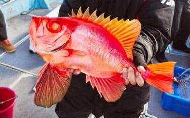 【福岡】沖のエサ釣り最新釣果 多彩な釣果期待できる五目釣りが好調