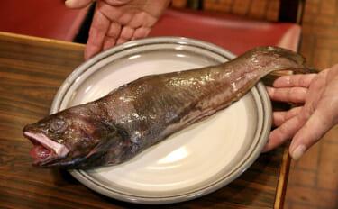 「ドンコ」と呼ばれるサカナのややこしい話 エゾイソアイナメは同種?