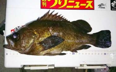 東京湾『ボートメバリング』が解禁 32cm尺メバル含み大型連打に歓喜