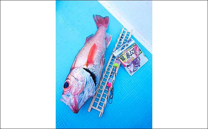 犬吠沖のアカムツ釣りで本命4尾 春先の本番にむけて好気配【丸天丸】