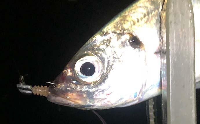 今さら聞けないアジングのキホン:「高活性時」に1匹でも多く釣る方法