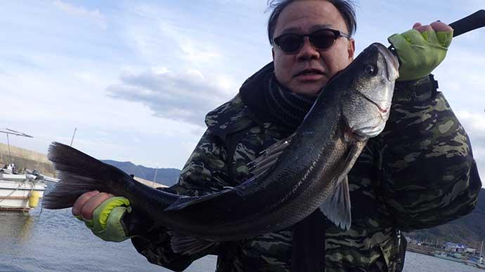 「乗っ込み」マダイ狙いのサビキ釣りで良型スズキが連発【鳴門海峡】