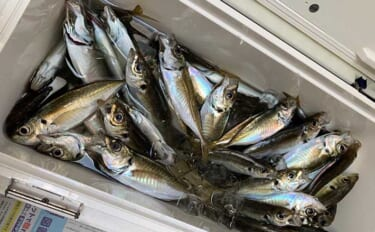 今さら聞けない東京湾LTアジのキホン:「コマセ」で魚は満腹になる?