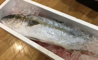遠征釣行の基礎知識:釣魚の持ち帰り方と注意点 計画的なリリースも