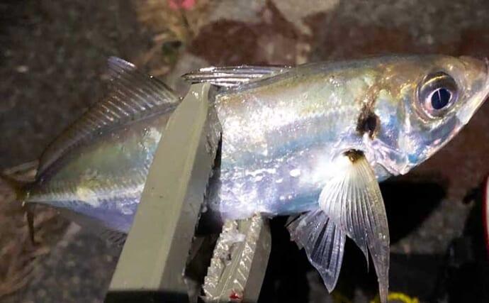 『アジング』ステップアップ解説:春に「尺級」アジを釣る方法