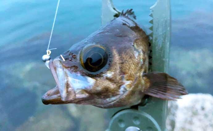経験者なら知っておきたい『メバリング』用語集 釣りの幅を広げよう