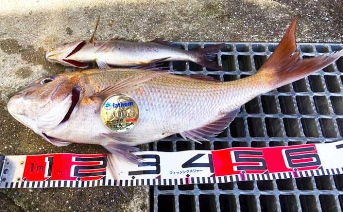 波止フカセ釣りで64cmマダイ浮上に驚愕 15分のやり取りを制す【山口】