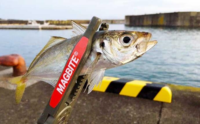 青森県陸っぱり好釣り場:小舟渡漁港 ファミリーフィッシングにも好適