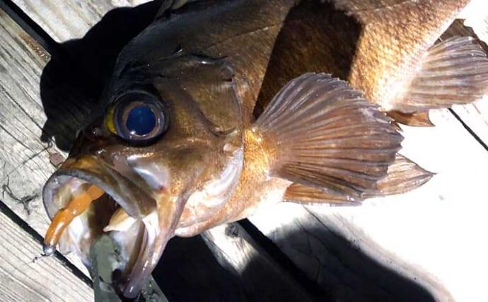 『ジグヘッド単体リグ(ジグ単)』のキホン:狙える魚種と推奨タックル