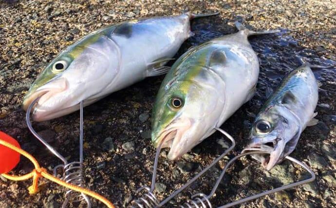 青森県陸っぱり好釣り場:おいらせ突堤 ゼロか爆釣かは『運』次第?