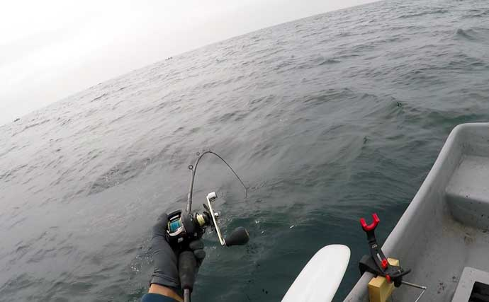 手こぎボートでのコマセ釣りで『乗っ込み』マダイ2尾手中【葉山釣具】